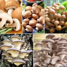 Домашняя Грибница Набор для выращивания грибов
